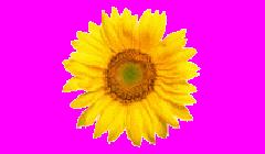 MŠ Slunečnice